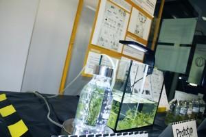 Gimnazjaliści opracowali prototyp lampki z ramienicą, rośliną pochłaniającą metale ciężkie, dzięki której możemy znacznie obniżyć ilość szkodliwych substancji w naszych domach oraz innych pomieszczeniach.