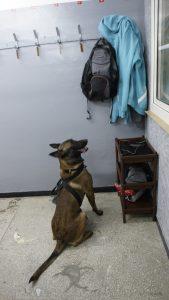 Pies szukający narkotyków w szkole